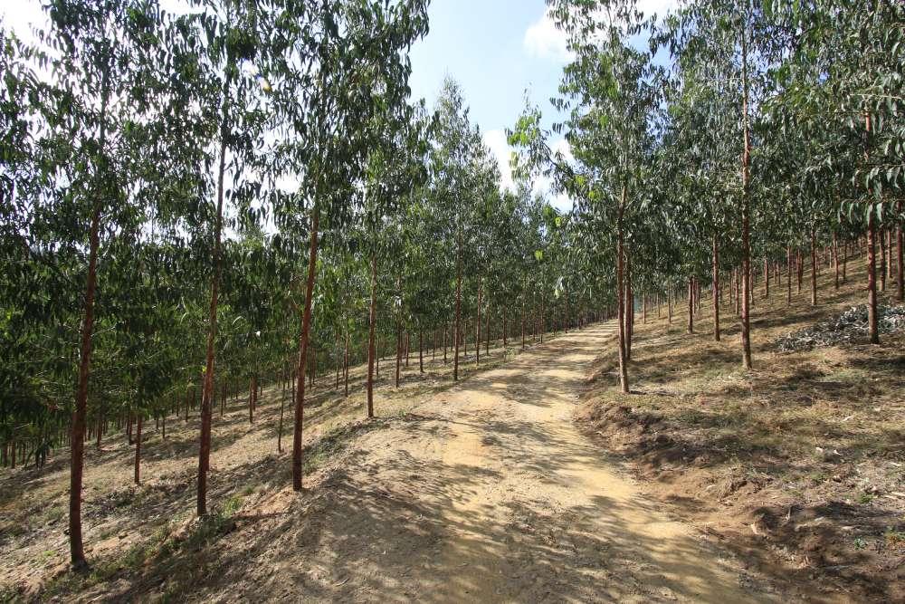 Limpieza forestal de fincas